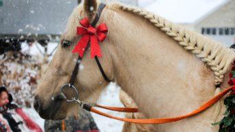 Horse Jokes, Puns, Captions Photo