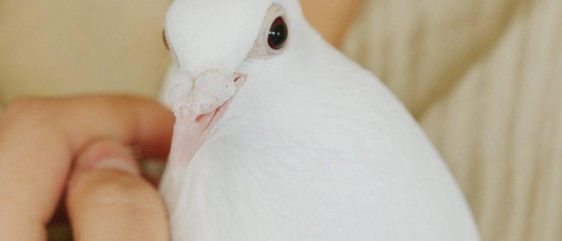 Bird Puns Jokes Image